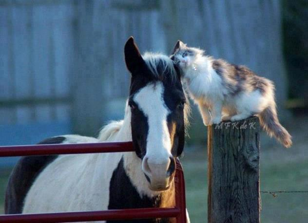 mixed species, cat and horse