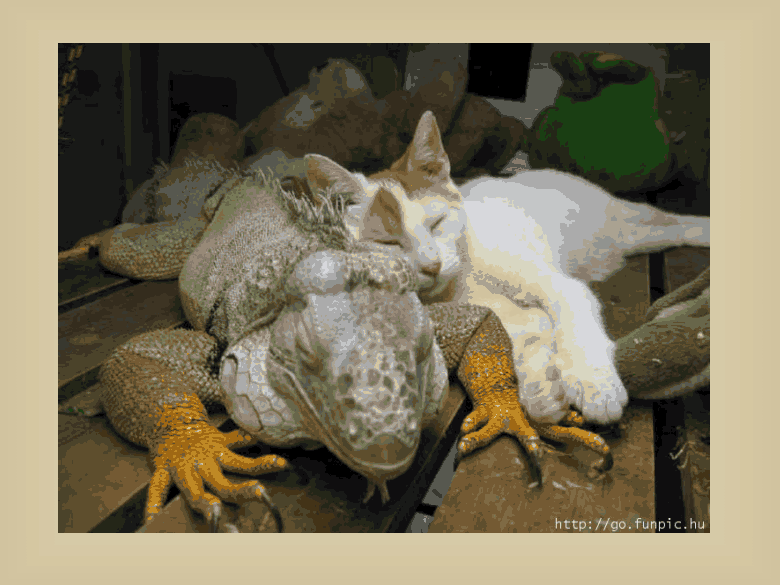 mixed species, cat and iguana