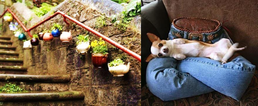 Teapot planter and jeans dogbed