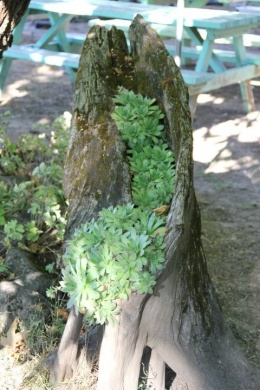 recycling, tree stump