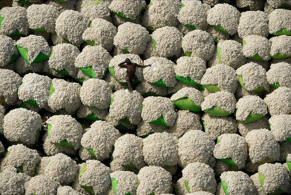Worker Resting on Bales of Cotton, Ivory Coast