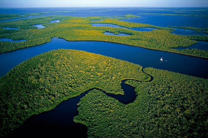 Mangroves in Everglades National Park, Florida, US