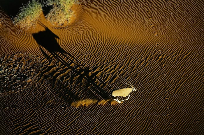 Oryx in the dunes of Sossusvlei Swakopmund region, Namibia