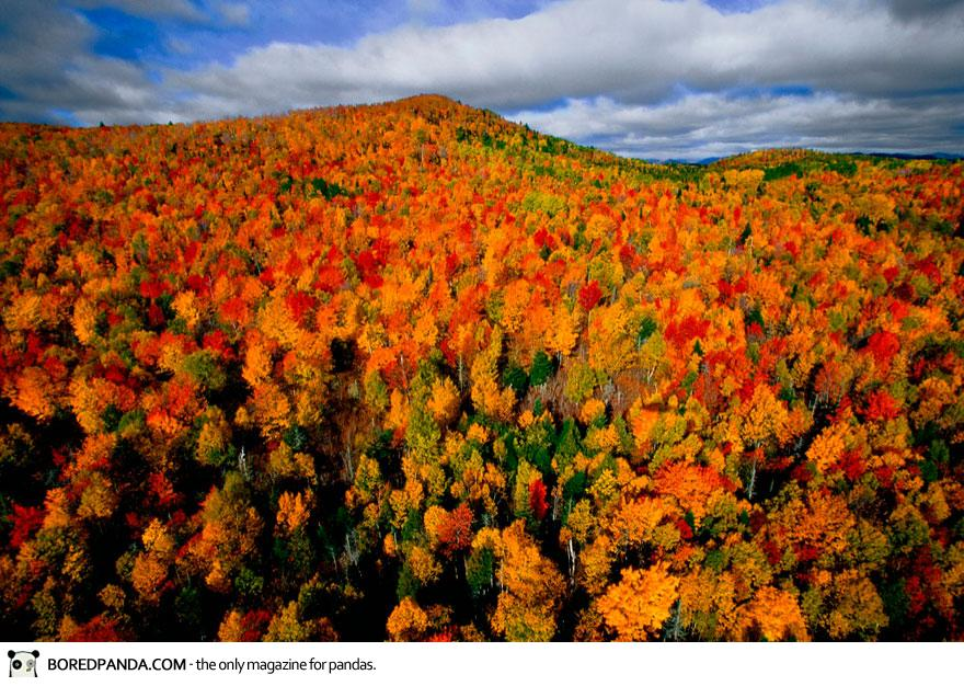 Autumn Forest in the Region of Charlevoix, Quebec, Canada