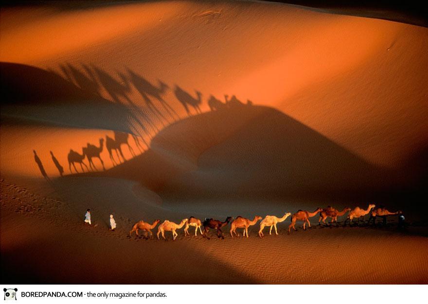 Dromedary Caravan Near Nouakchott, Mauritania