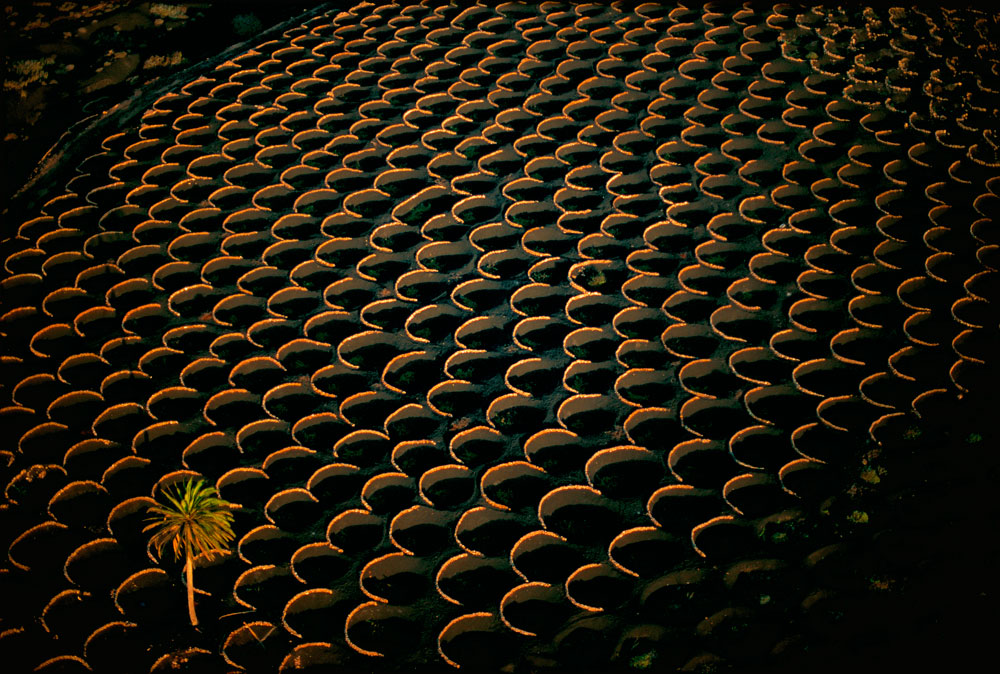 vineyards, Canary Islands, Spain
