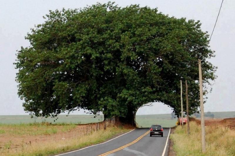 trees, 9, 6