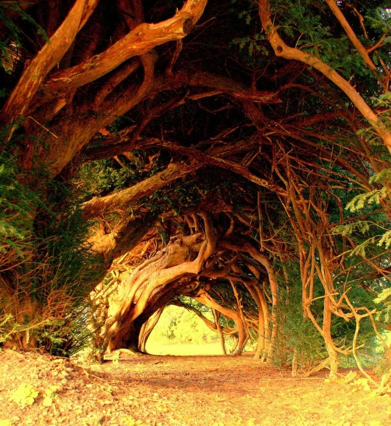 trees, 9 wows via gary w
