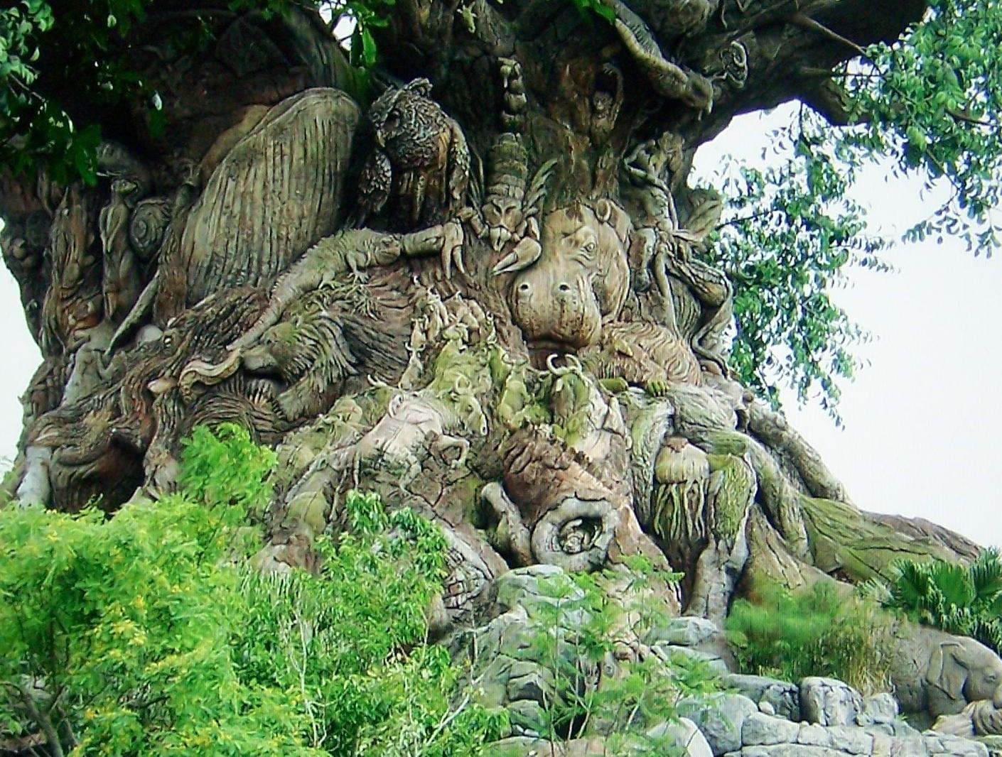 Wonder of trees