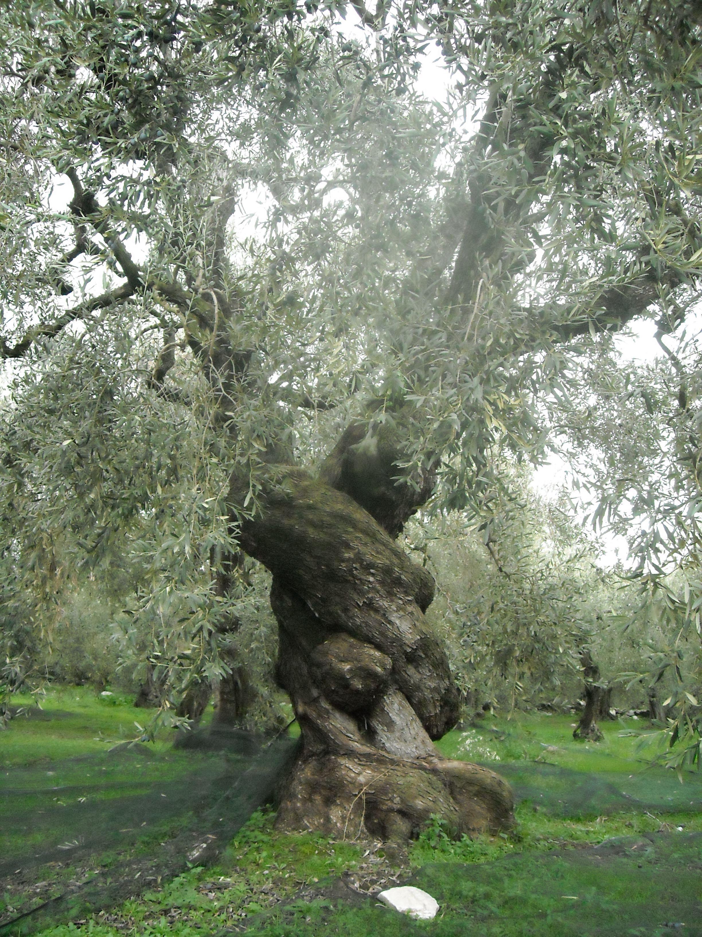 most unusual trees | Dusky's Wonders