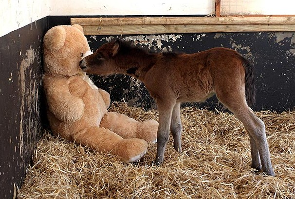 abandoned by it's Mom, taken to Devon, England-based Mare and Foal Sanctuary