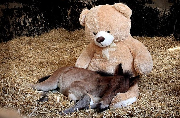 Teddy and foal inseparable, from Kathleen