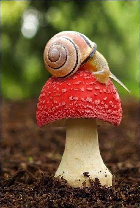 animal, snail