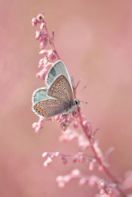 animals, butterfly