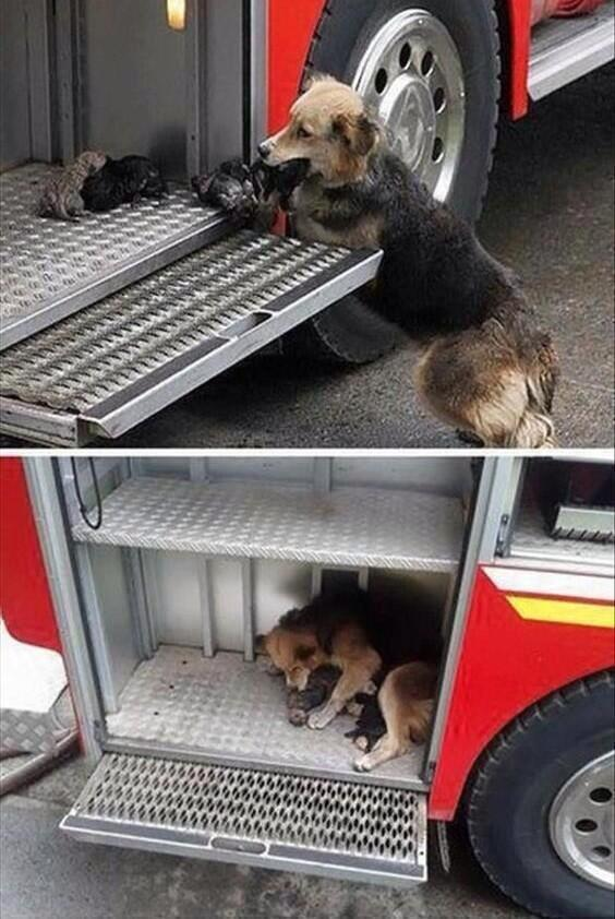 Dog saves her puppies from fire.