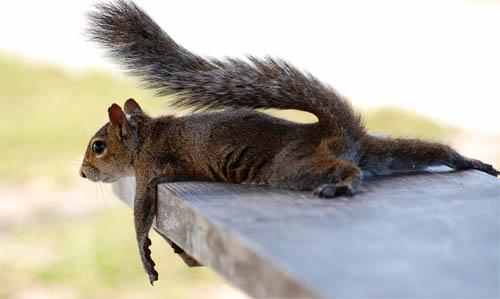 animals, squirrel