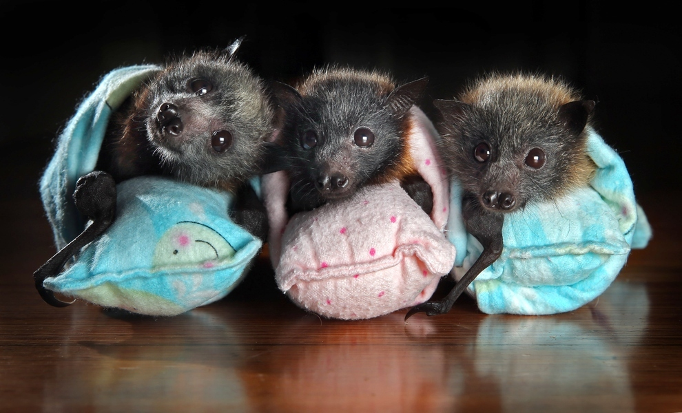animals, who knew bats could be so cute