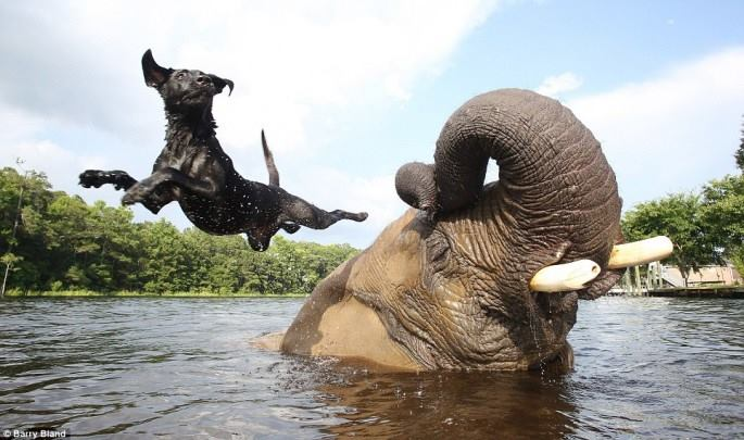 mixed species, dog and elephant
