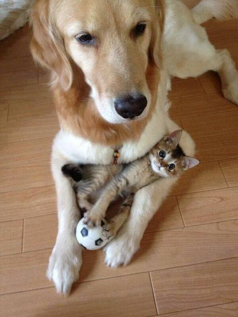 mixed species, dog and kitten