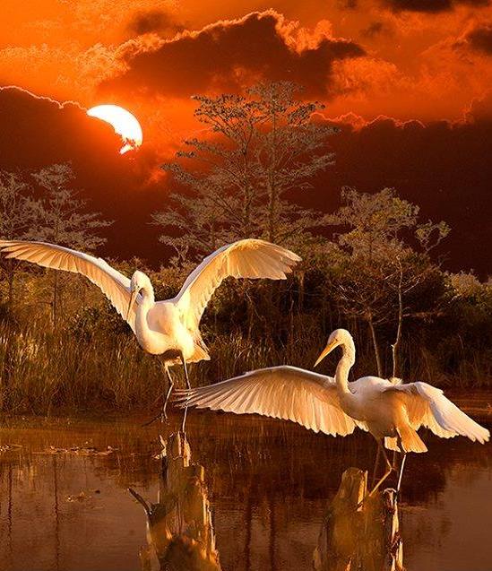 Florida Everglades,  Photo by, Susan Schermer , from Iryna via pinterest