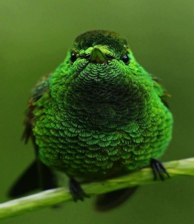animals, green bird