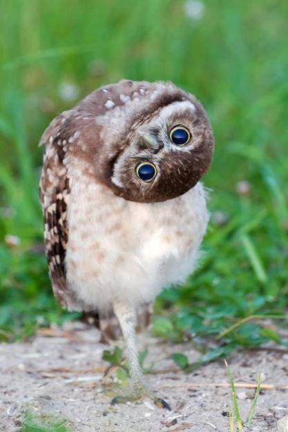 animals, owl 2