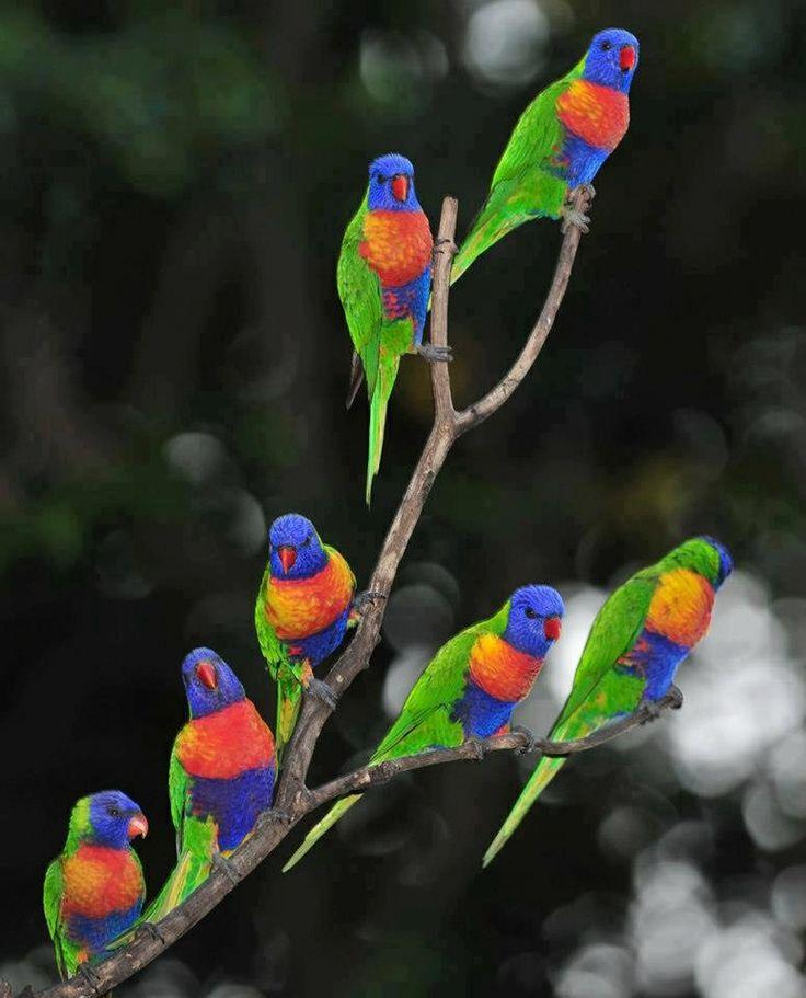 birds, many