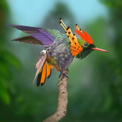 Tuffed Coquette Hummingbird