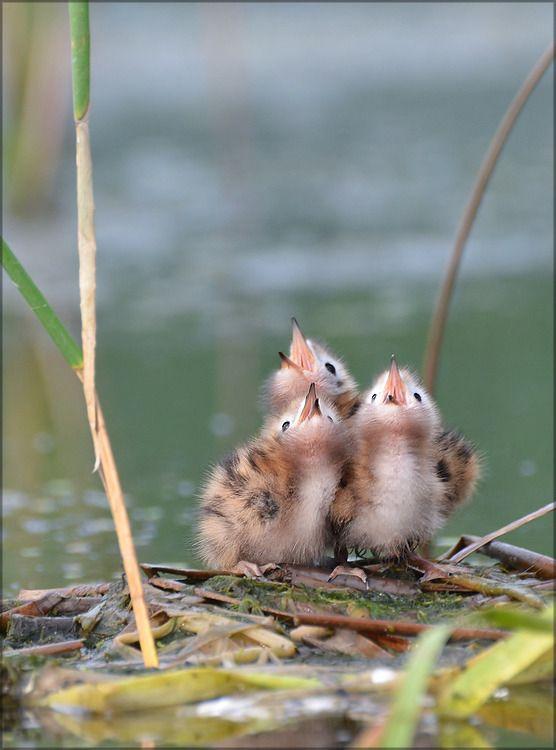 animals, baby birds