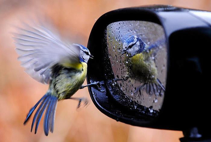 animals, bird