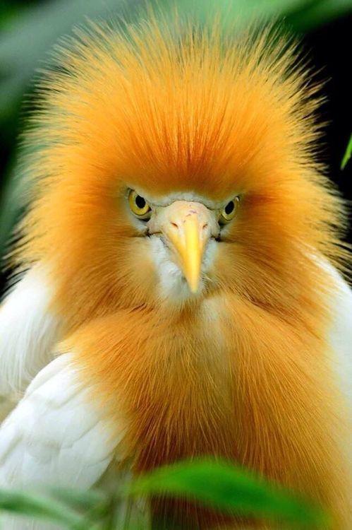 animals, birds (2)