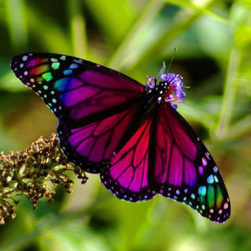 animals, butterflies