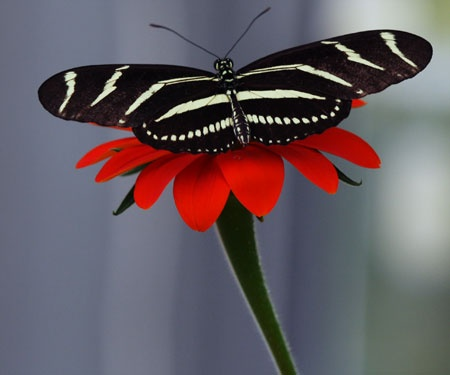 animals, butterfly 2