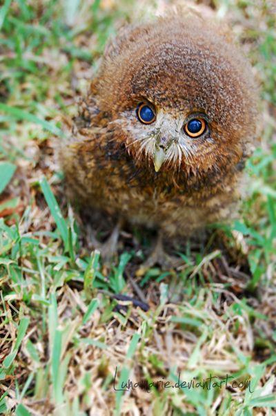 animals, owl, 2