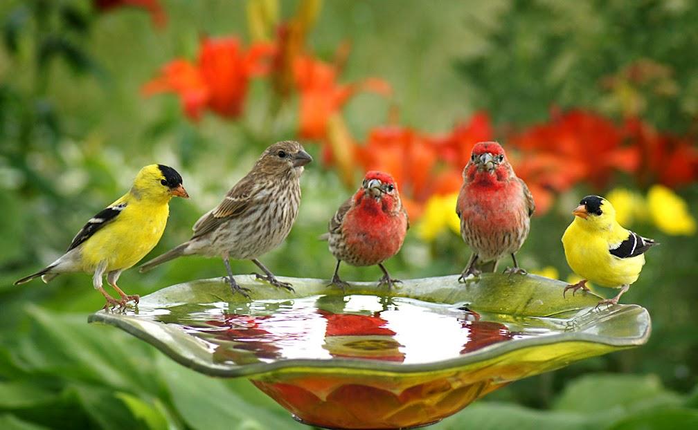 birds, 2