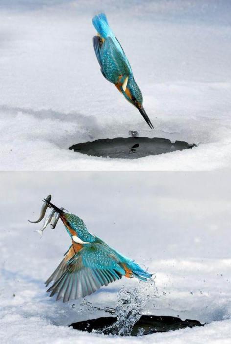 birds, amazing photographer