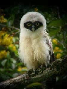 birds, owl via pint