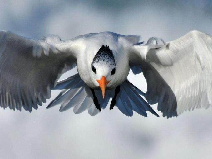 birds, via shira