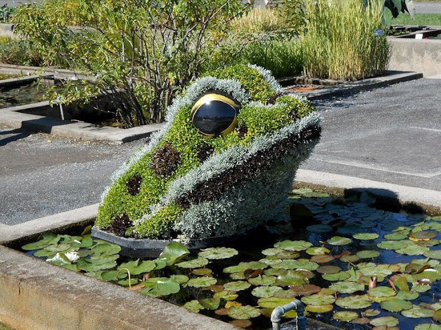 d12 frog in lily pond