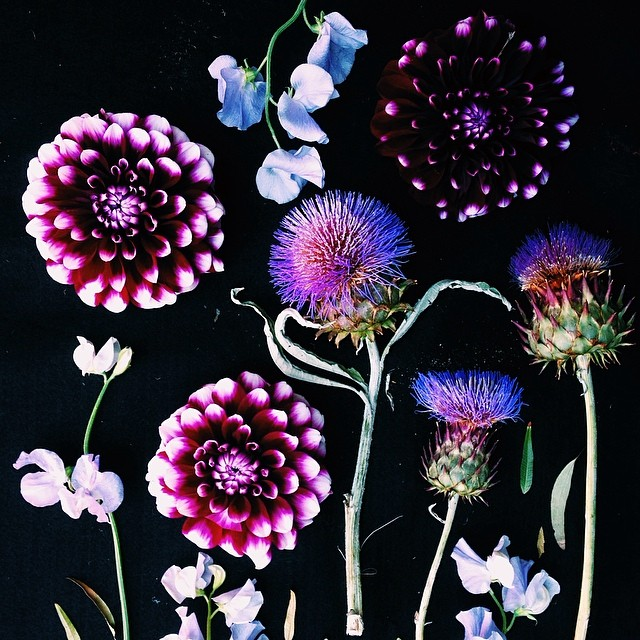 flower art , justina blakeney 3