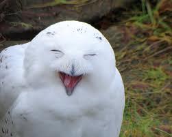 white owl 2