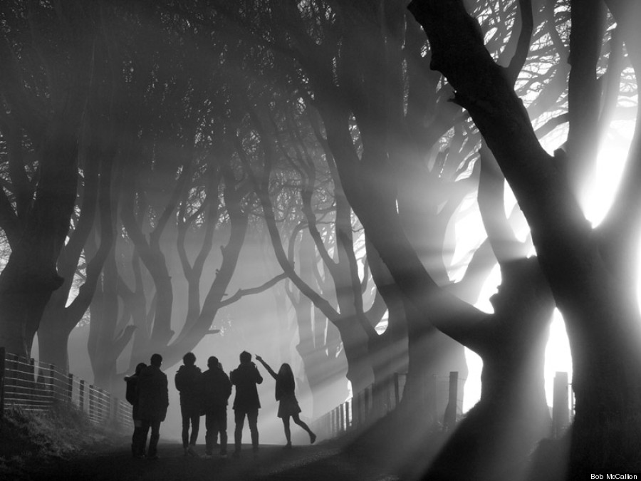 Mystical Morning, The Dark Hedges, County Antrim, Northern Ireland