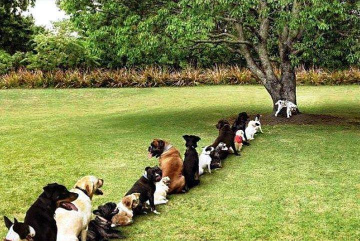 animals, dogs in line