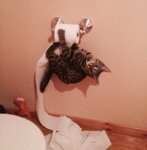 animals, kitten and tp
