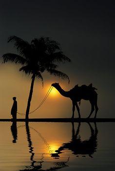 exqui image, camel