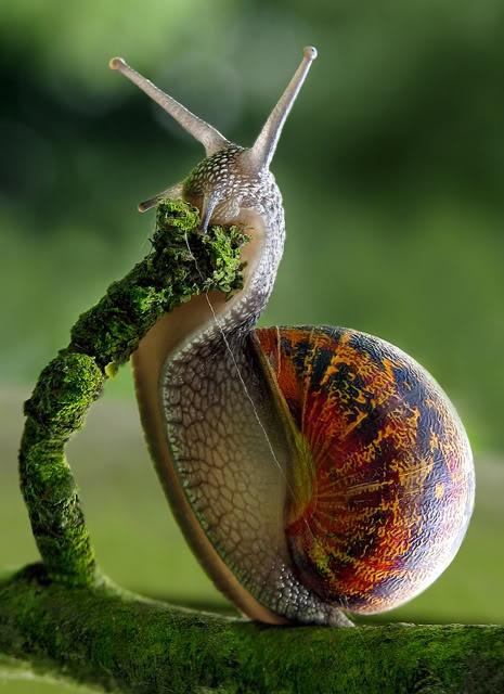 exqui image, snail
