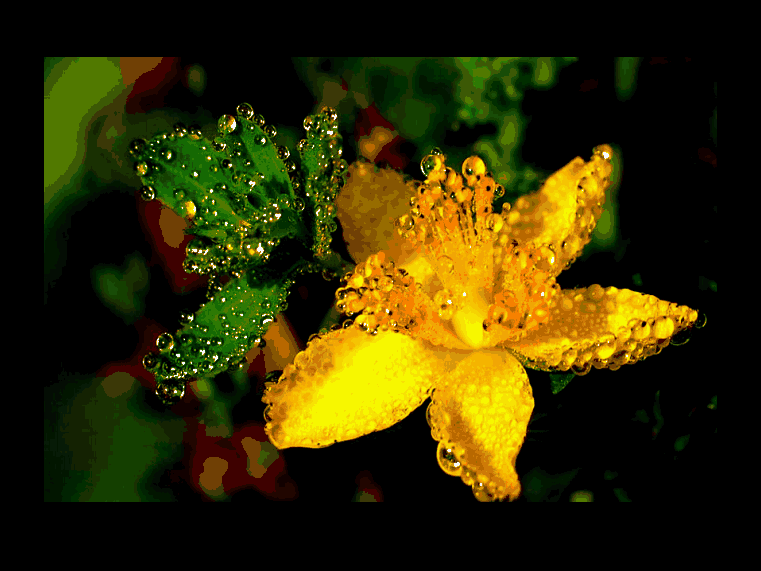 exqui images, raindrops, kathleen