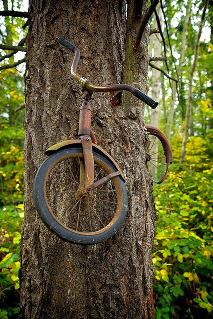 Tree Enveloping Bike
