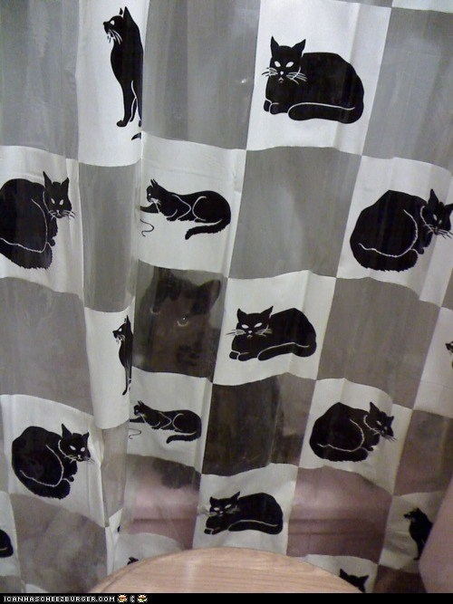 animals, cat, shower curtain