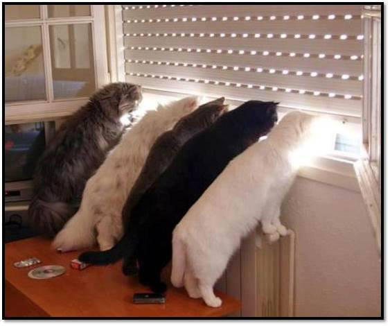 animals, cats in line